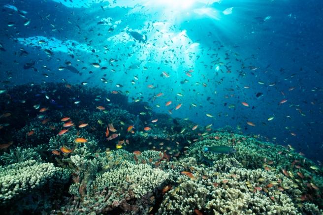 Met de groetjes van de oceanen!